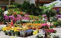 Avviso Apertura Mercato Domenicale delle Piante e Fiori in Via Einaudi