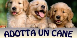 locandina Adotta un cane