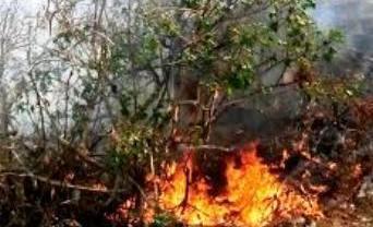 Prevenzione incendi e pulizia fondi incolti